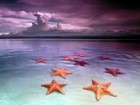 Beach starfish - Boca del Drago